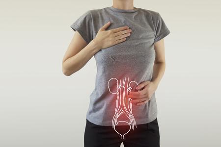Anatomía del riñón femenino humano resaltada en rojo en el cuerpo