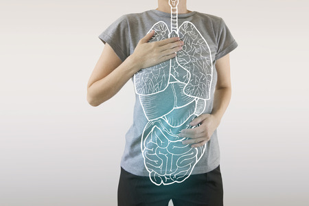 highlighted blue internal organs of healthy human organsim / protection from illnesses