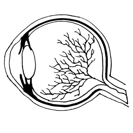 Linear hand drawn illustration of human eye for logotype or banner  design template