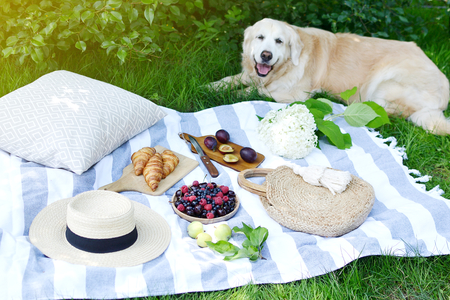 Picnic with  Golden Retriever Labrador Family  Style Food Fruit Bakery Berries Green Grass Summer Time Rest Background Sunlight Banque d'images
