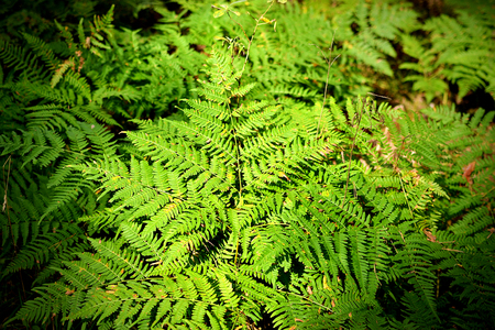 Fern Leafs Autumn Time Forest Outdoor Concept Text Copy Space 스톡 콘텐츠