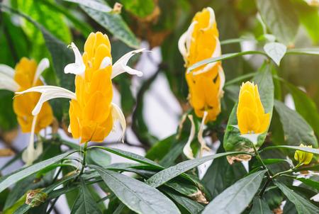 Tropical Landscape Flowers Leaves Background Toned Landscape Фото со стока