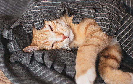 Relaxed little ginger kitten, relaxed time, toned photo, vintage