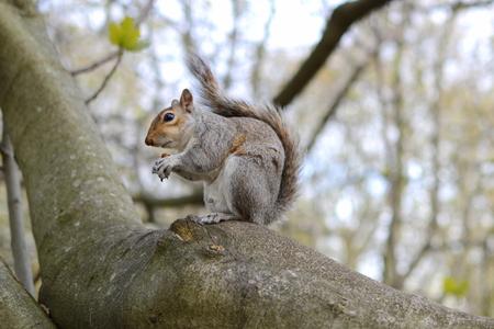 Squirrel on the ground Фото со стока
