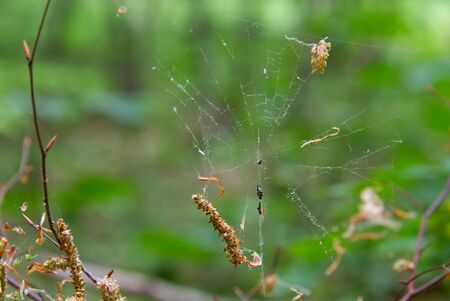 Spider web and a spider waiting to catch its prey, cobweb photo