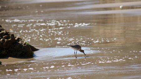 MALIBU, UNITED STATES - OCTOBER 9, 2014: Beautiful and romantic El Matador State Beach in Southern California. Stock Photo