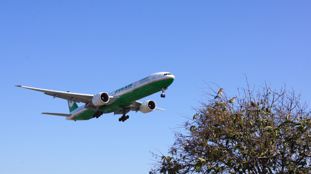 LOS ANGELES, CALIFORNIA, UNITED STATES - OCT 9th, 2014: EVA Air Boeing 777 shown shortly before landing at the LA Airport LAX.