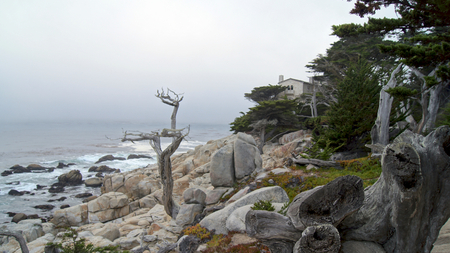 MONTEREY, CALIFORNIA, UNITED STATES - OCT 6, 2014: The Lone Cypress, seen from the 17 Mile Drive, in Pebble Beach, CA USA, along Pacific Coast Highway, scenic view Hwy No 1