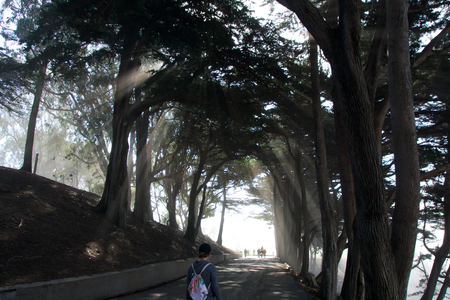 SAN FRANCISCO, CALIFORNIA, UNITED STATES - NOV 11th, 2018: Light rays through trees at Fort Mason park in Golden Gate National Recreation Area with people
