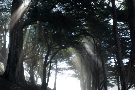 SAN FRANCISCO, CALIFORNIA, UNITED STATES - NOV 11th, 2018: Light rays through trees at Fort Mason park in Golden Gate National Recreation Area
