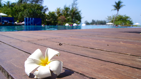 KEDAH, LANGKAWI, MALAYSIA - APR 05th, 2015: Tropical flower Plumeria on swimming pool at a luxury hotel Redakční