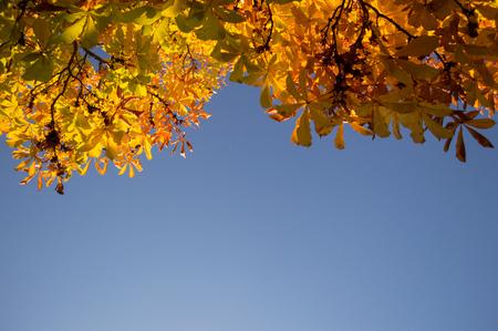 Yellow Autumn Leaves on Tree at Carmen de los Martires Park in Granada, Spain 版權商用圖片