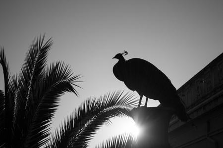 Peacock at Carmen de los Martires Park in Granada, Spain
