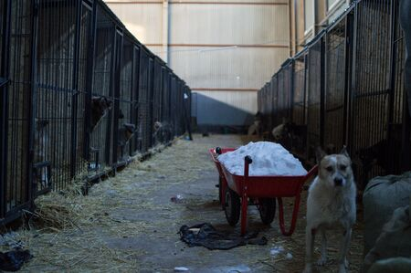 Dogs and Kernels at a Dog Shelter during Winter in Astana, Kazakhstan