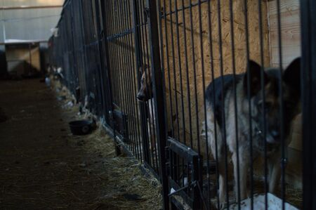 Dogs and Kernels at a Dog Shelter during Winter in Astana, Kazakhstan Stok Fotoğraf