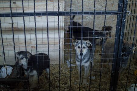 Dogs in a Kernel at a Dog Shelter during Winter in Astana, Kazakhstan
