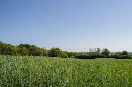 Agricultural Landscape Scenery in Denmark