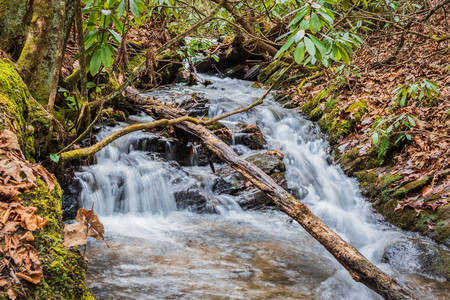 Small mountain waterfall, in rhododendron thicket, with fallen limb across the stream.