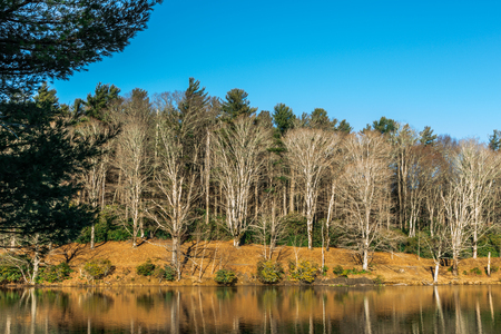 Mountain lake shore in winter, with bright-barked, leafless, deciduous trees backed by taller evergreens, and a sparkling yellow reflection of dormant grass on the bank.