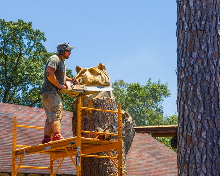 AURORA, KY, USA-30 JUNE 18: A chain saw sculptor standing on a scaffold carves a bear head on a standing tree trunk. Editorial