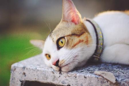 kitty cat: Kitty cat resting Stock Photo