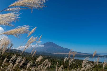 Mountain Fuji without snow cover its peak from a viewpoint around Wanakako lake in a morning with brown grass in foreground and blue sky in background. Imagens