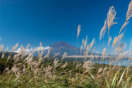 Mountain Fuji without snow cover its peak from a viewpoint around Wanakako lake in a morning with brown grass in foreground and blue sky in background
