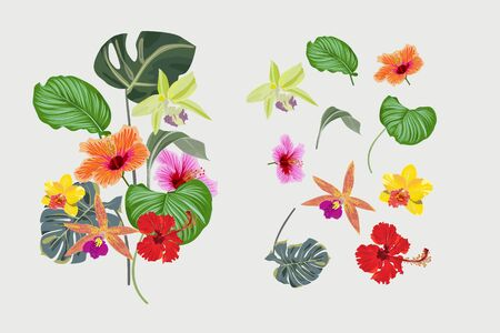 Set of tropical floral and leaves for design with orchid flower, palm leaves and Hibiscus flowers for fabric and wallpaper.