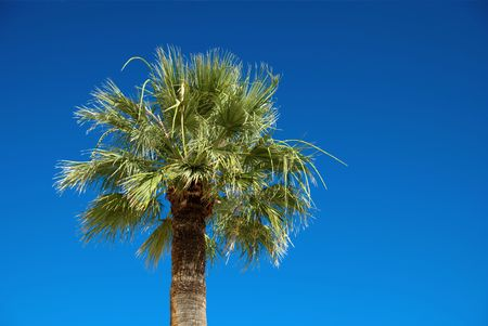 Palm tree on blue sky with copy space photo