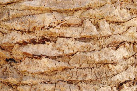 Palm tree texture photo