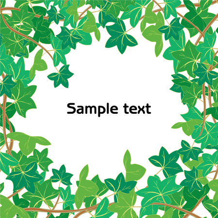 ivy wall: Vector illustration of Green ivy frame - insert your text or picture