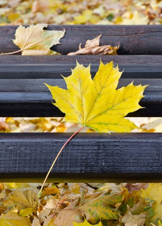 Closeup of Park bench in autumn, vertical shot photo