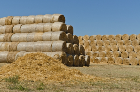 haystack: pasture straw and stacks of hay bales on the cattle farm, horizontal shot Stock Photo