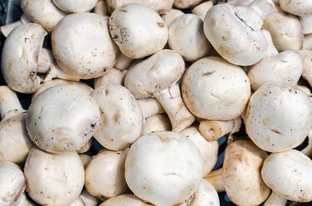champignon: Fresh Champignon  Mushrooms  Background on farmers market, horizontal shot