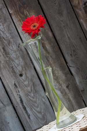 tilted: red gerbera flower in the vase  against wooden wall, tilted shot