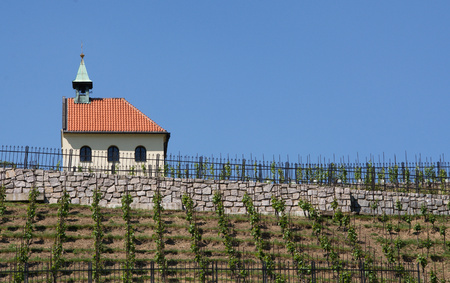 The Chapel of St. Klara and historic vineyards, part of Prague Botanical Garden, Troja district Editorial