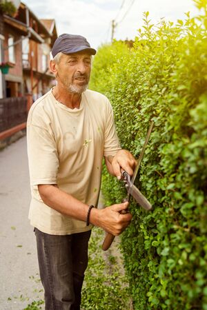 Man gardener using garden shears to cut trim the fence hedge in the summer day professional manual