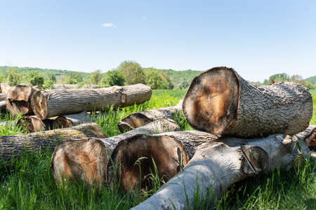 Large pile of firewood or wood logs at sawmill ready to be processed Stock Photo