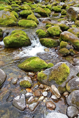 Water flowing over stones overgrown with moss. A mountain stream at the foot of the Tatra Mountains. Stock Photo