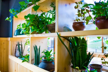karaoke bar: new cafe with lots of plants, ornaments and wooden furniture