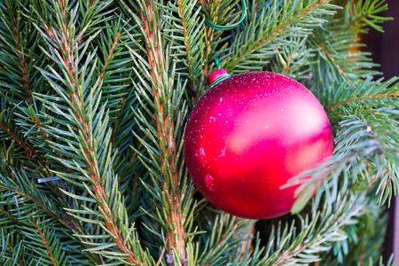 feliz: Christmas red ball  on the background of fir branches and wood Stock Photo