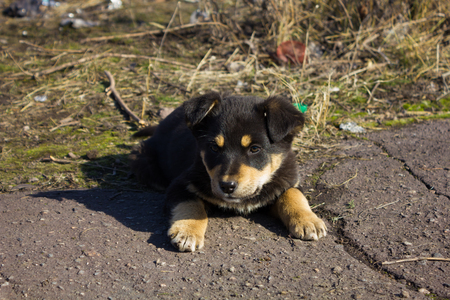 brown and black dog face: Little funny homeless puppiy on the street