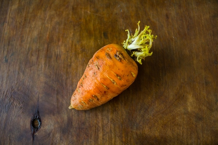 sprouted: Orange carrots sprouted from the tip lies on a wooden table
