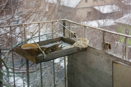flew: Sparrows flew to the feeder is located on the balcony