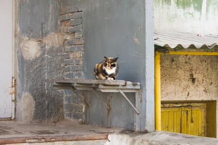 tri  color: The yard homeless tricolor cat sitting on a porch bench