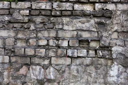 black mold: Old brick wall covered with black mold as a background and texture