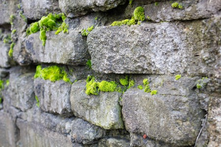 black mold: Old textured original brick walls covered with black mold and green moss as background and texture