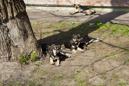 vagrant: a small flock of homeless puppies sitting under a tree in the street