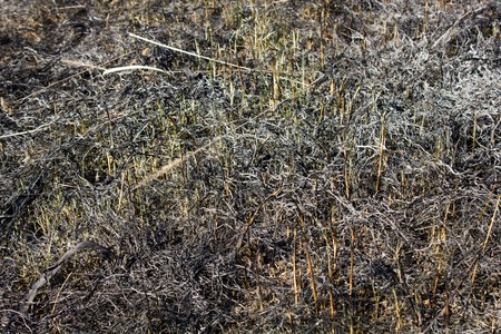 scorched: Scorched grass meadow as a background and texture