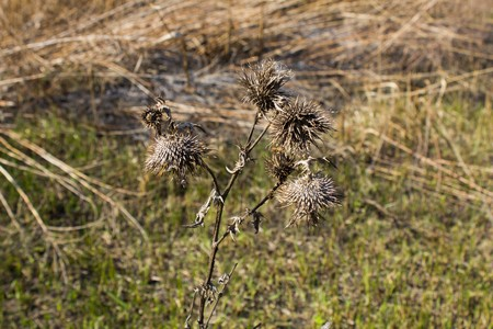 pastureland: Scorched grass meadow as a background and texture